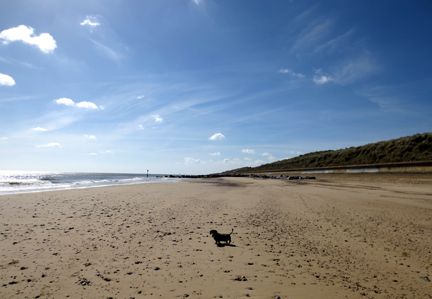 Norfolk beach and miniature dachshund