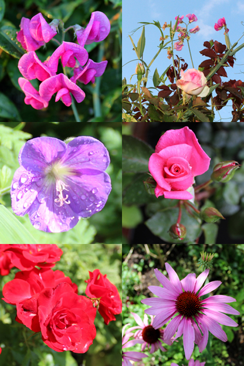 Flower Montage Digital SLR camera parctice