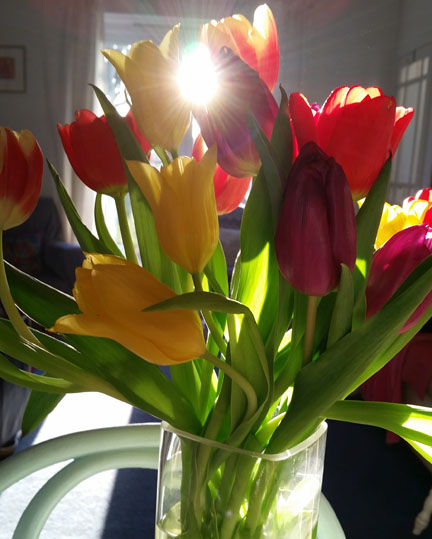 tulips for Happy Friday